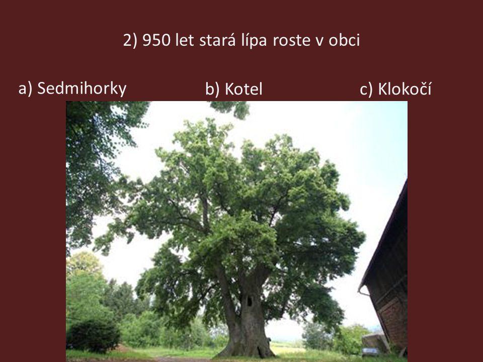 2) 950 let stará lípa roste v obci