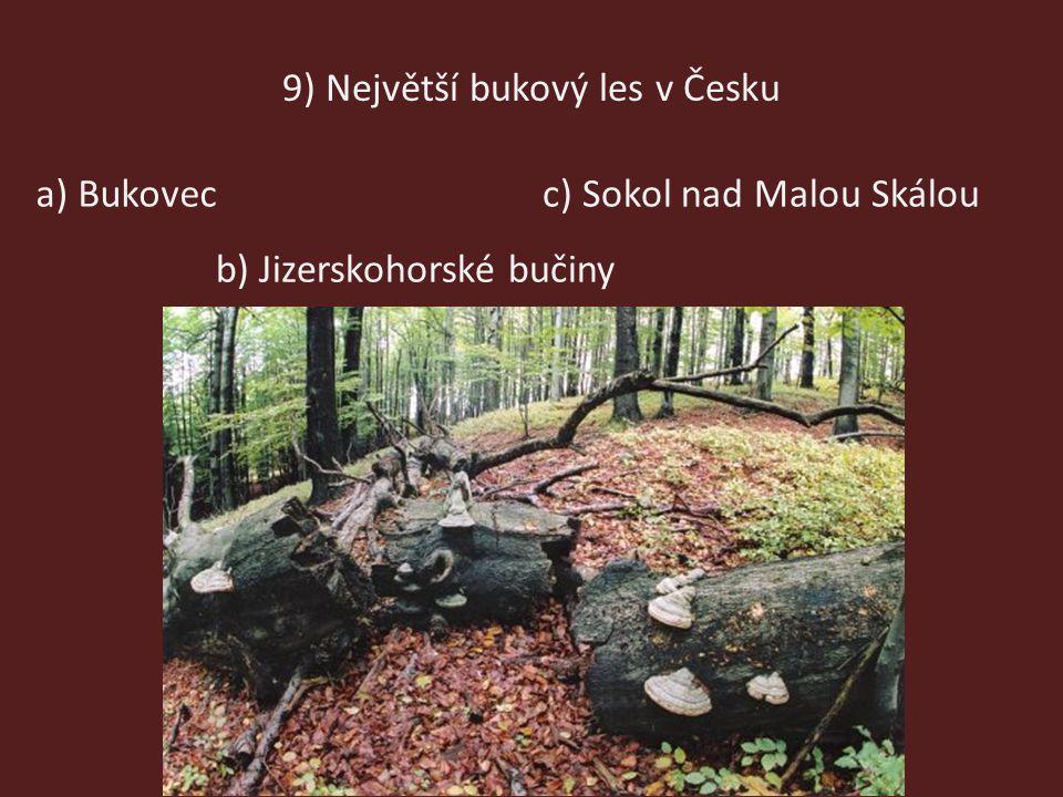 9) Největší bukový les v Česku