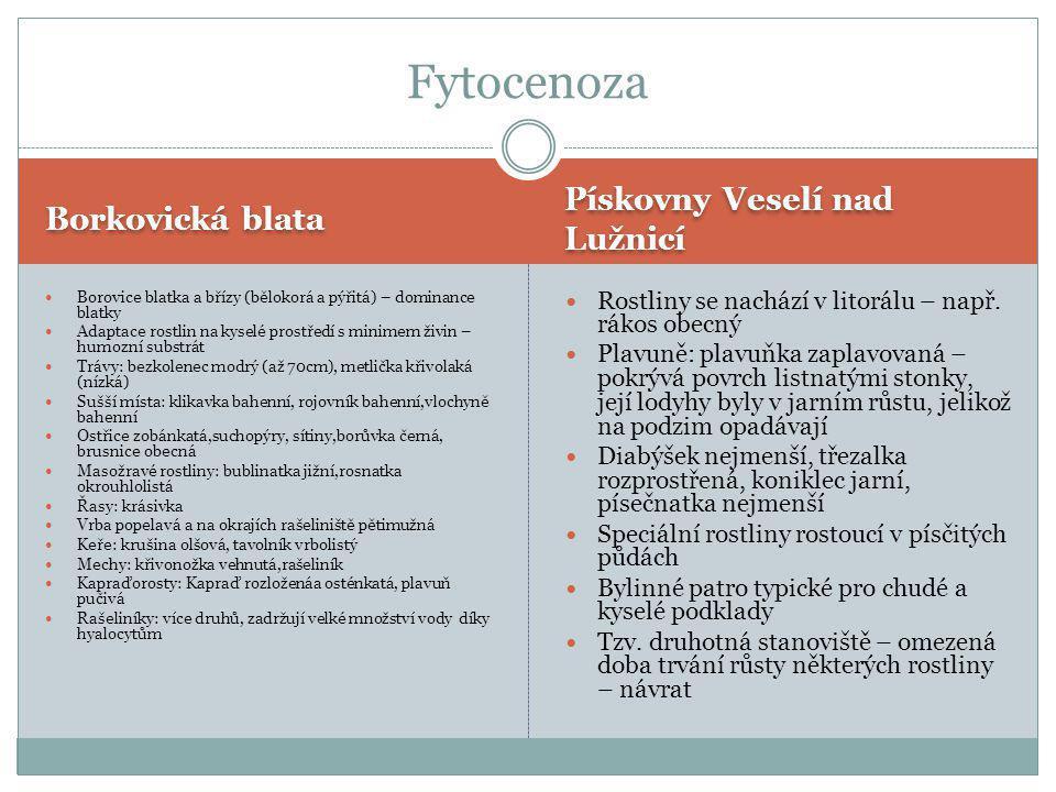 Fytocenoza Pískovny Veselí nad Lužnicí Borkovická blata