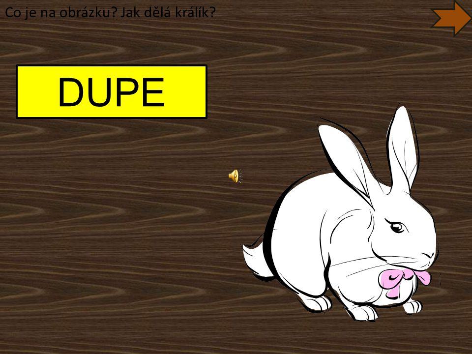 Co je na obrázku Jak dělá králík