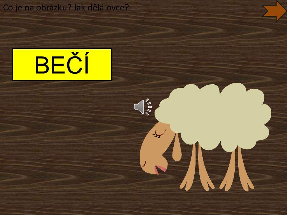 Co je na obrázku Jak dělá ovce