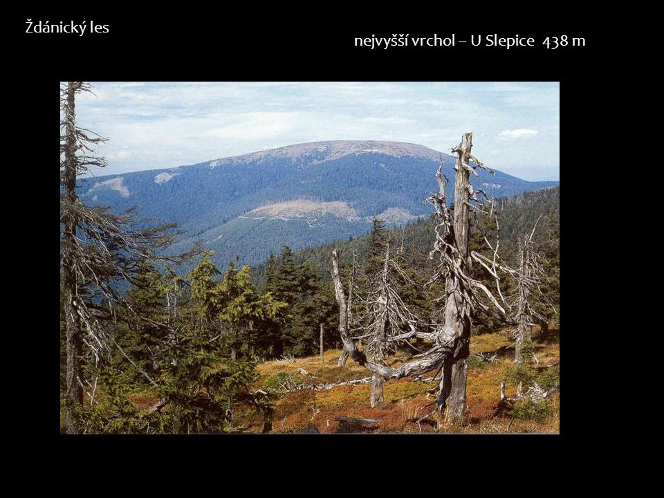 Ždánický les nejvyšší vrchol – U Slepice 438 m