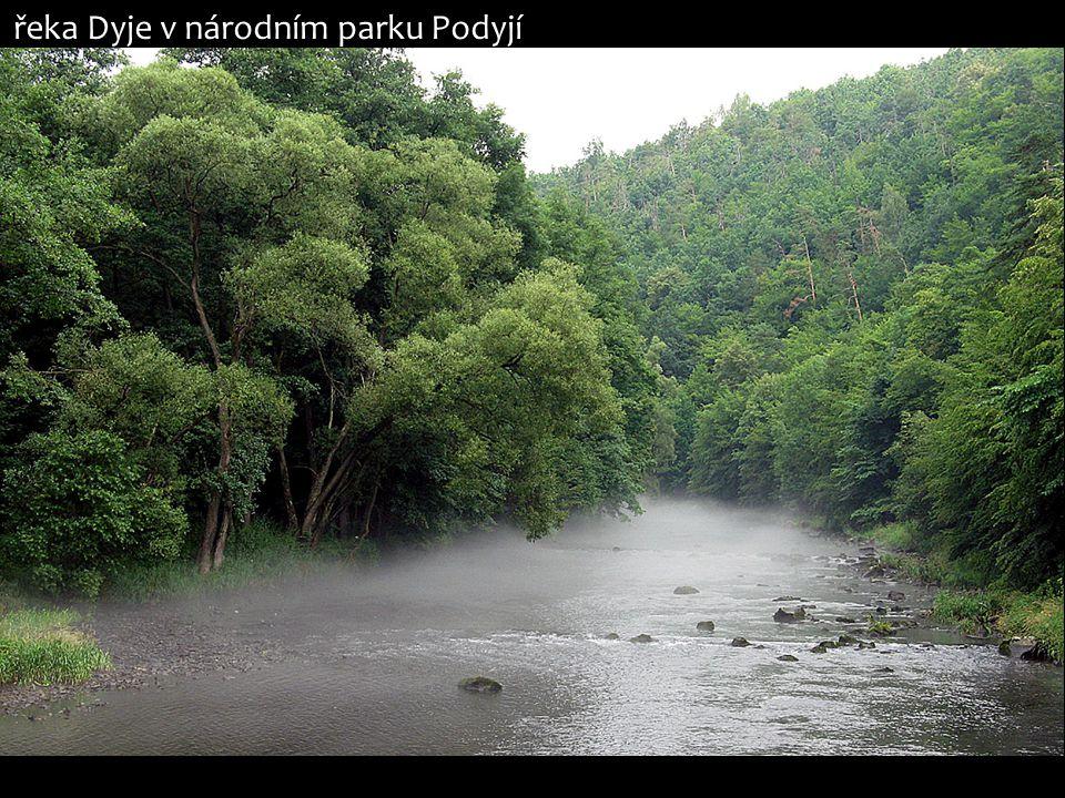 řeka Dyje v národním parku Podyjí