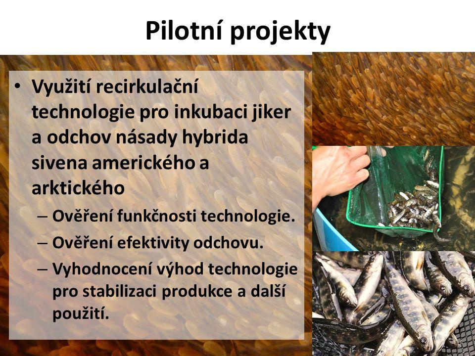 Pilotní projekty Využití recirkulační technologie pro inkubaci jiker a odchov násady hybrida sivena amerického a arktického.