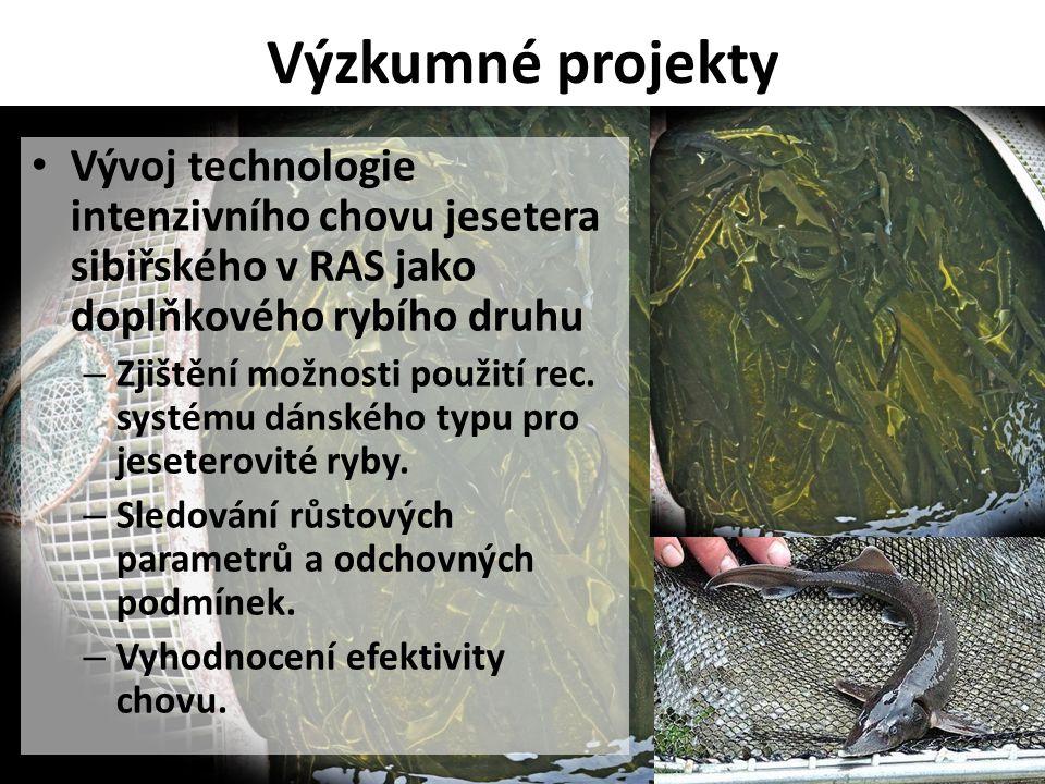 Výzkumné projekty Vývoj technologie intenzivního chovu jesetera sibiřského v RAS jako doplňkového rybího druhu.