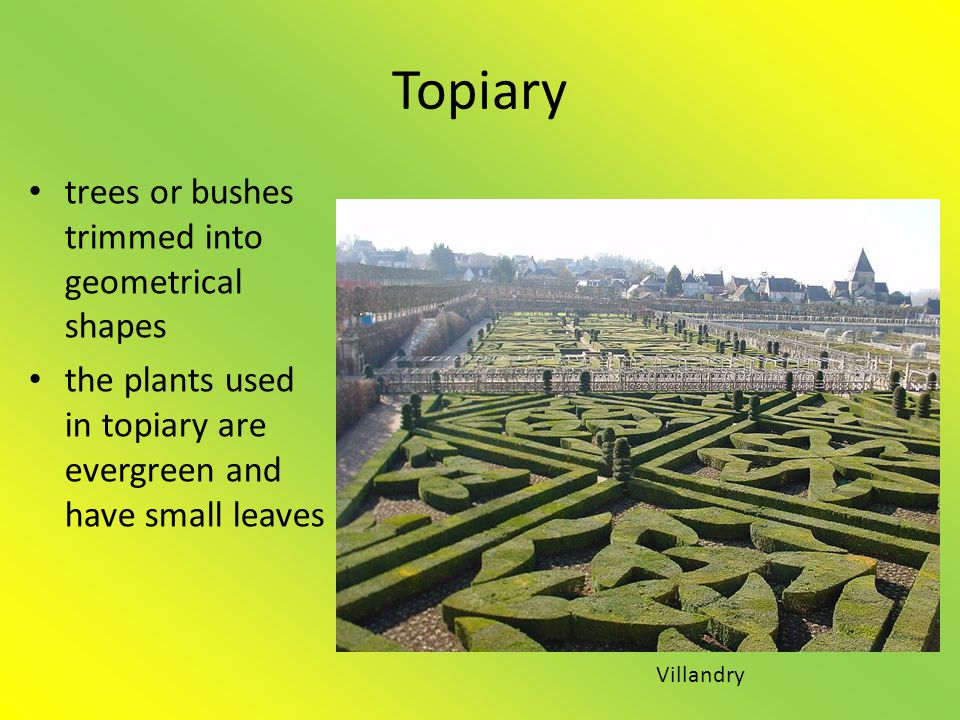 Topiary trees or bushes trimmed into geometrical shapes