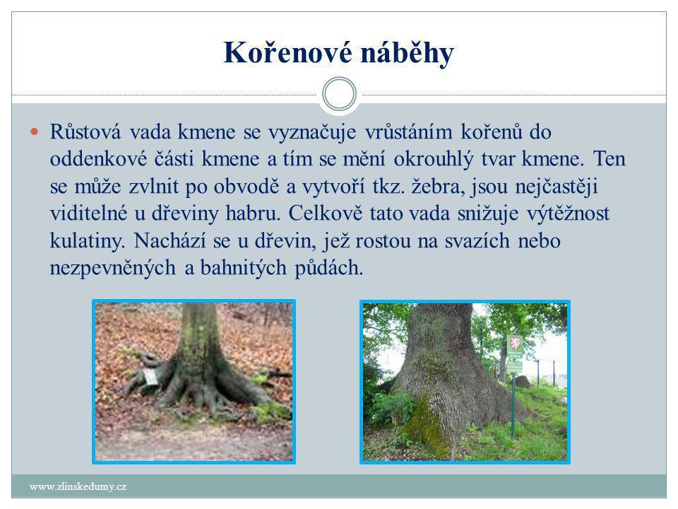 Kořenové náběhy