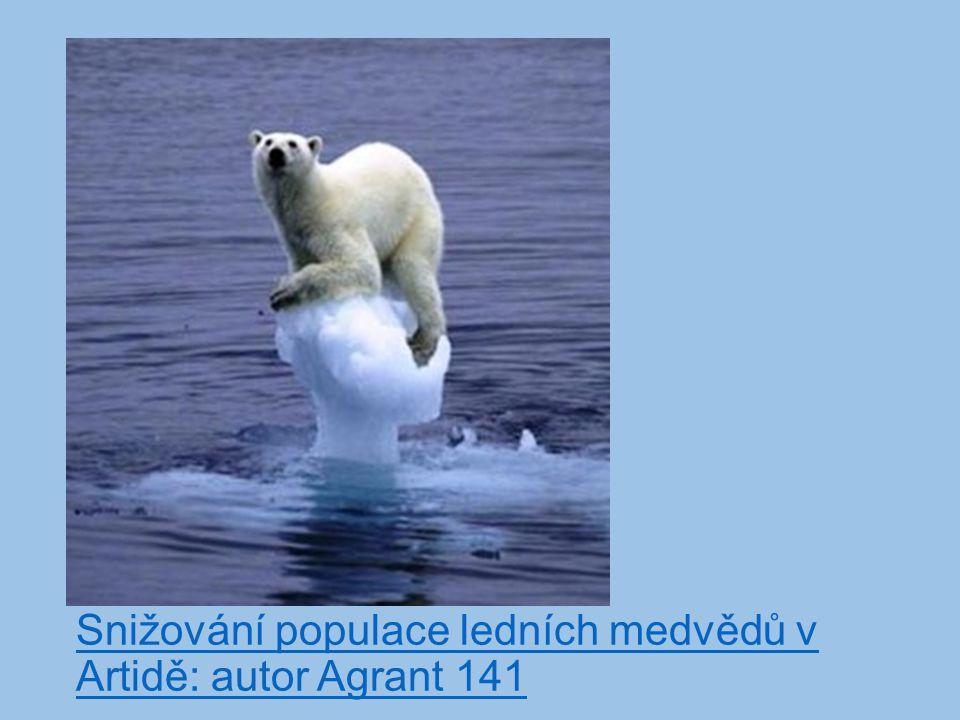 Snižování populace ledních medvědů v Artidě: autor Agrant 141