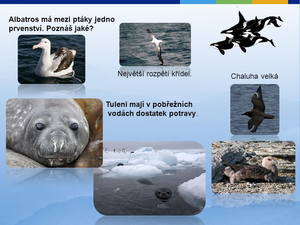 Albatros má mezi ptáky jedno