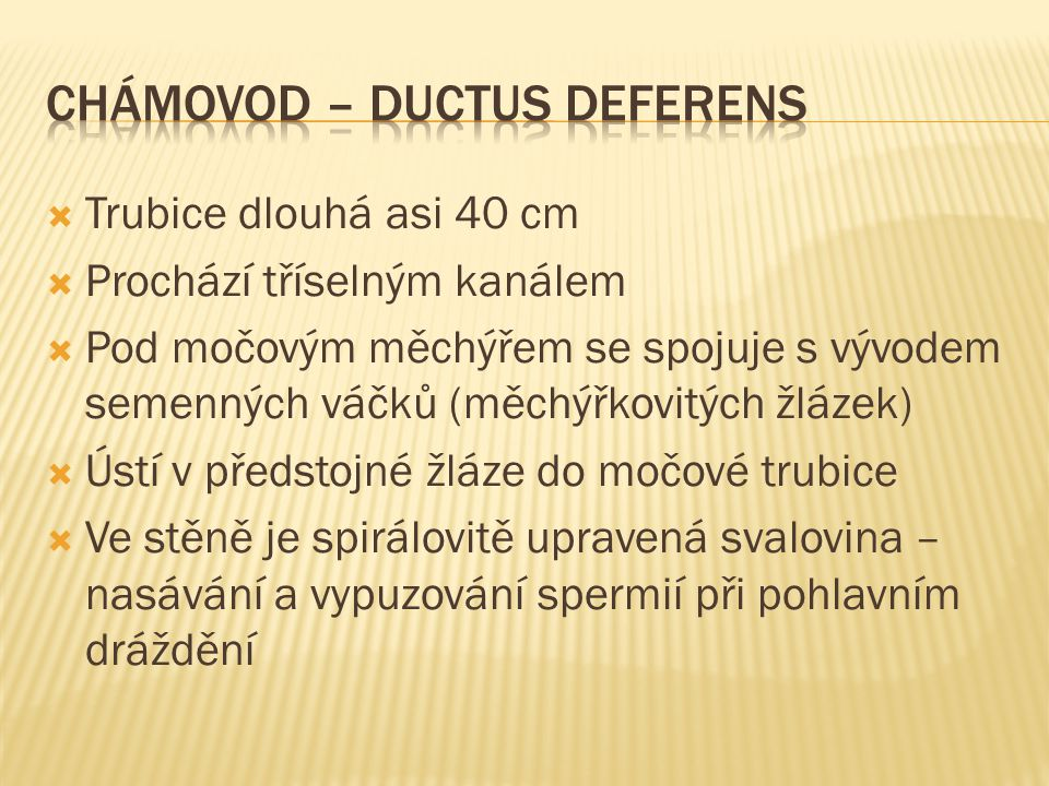 Chámovod – ductus deferens