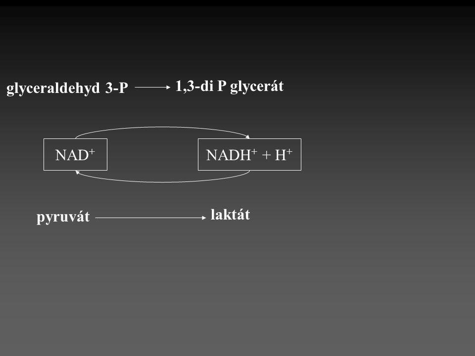 glyceraldehyd 3-P 1,3-di P glycerát NAD+ NADH+ + H+ laktát pyruvát