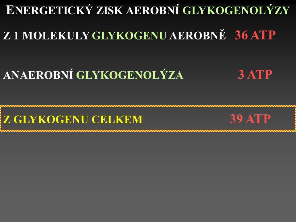 ENERGETICKÝ ZISK AEROBNÍ GLYKOGENOLÝZY