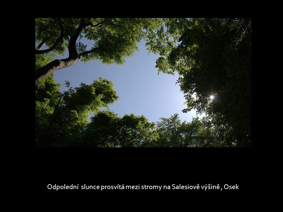 Odpolední slunce prosvítá mezi stromy na Salesiově výšině , Osek
