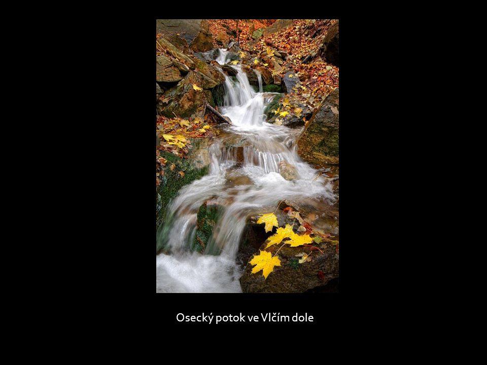Osecký potok ve Vlčím dole