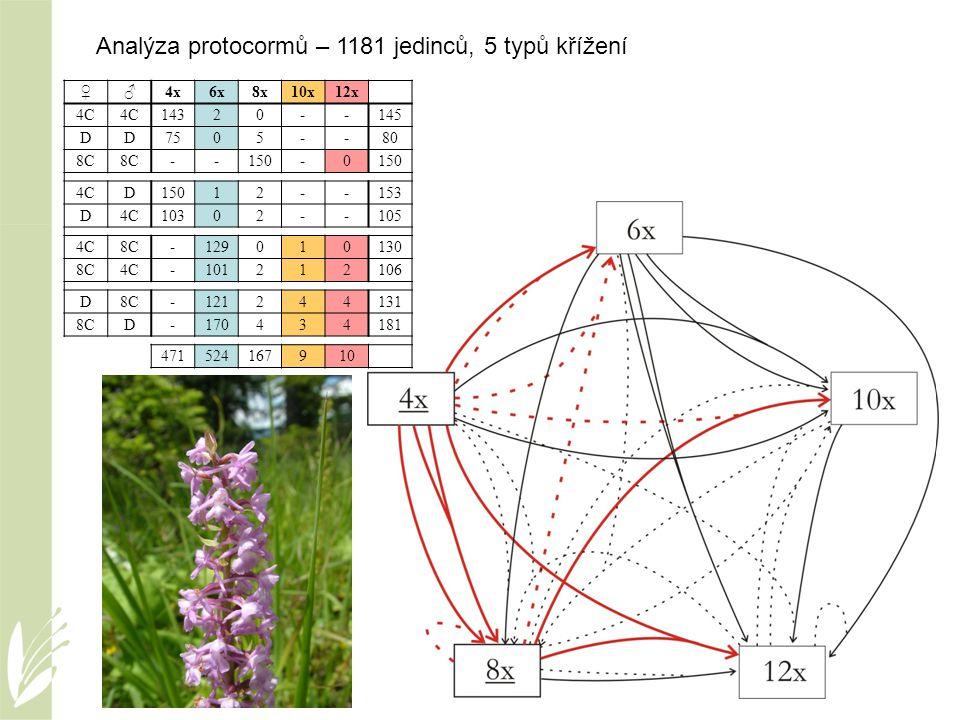 Analýza protocormů – 1181 jedinců, 5 typů křížení