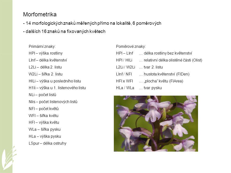 Morfometrika - 14 morfologických znaků měřených přímo na lokalitě, 6 poměrových. dalších 16 znaků na fixovaných květech.