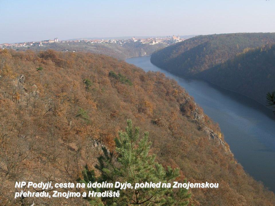 NP Podyjí, cesta na údolím Dyje, pohled na Znojemskou přehradu, Znojmo a Hradiště