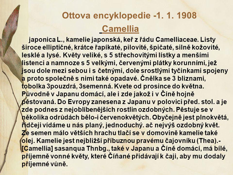 Ottova encyklopedie -1. 1. 1908 Camellia