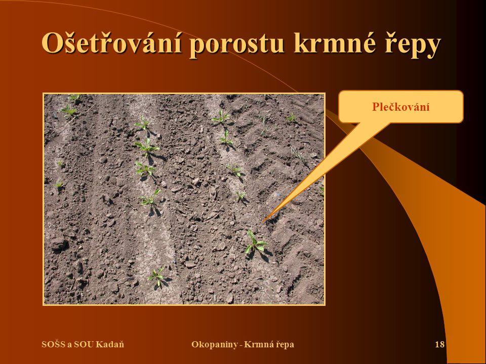 Ošetřování porostu krmné řepy