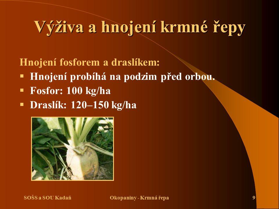 Výživa a hnojení krmné řepy