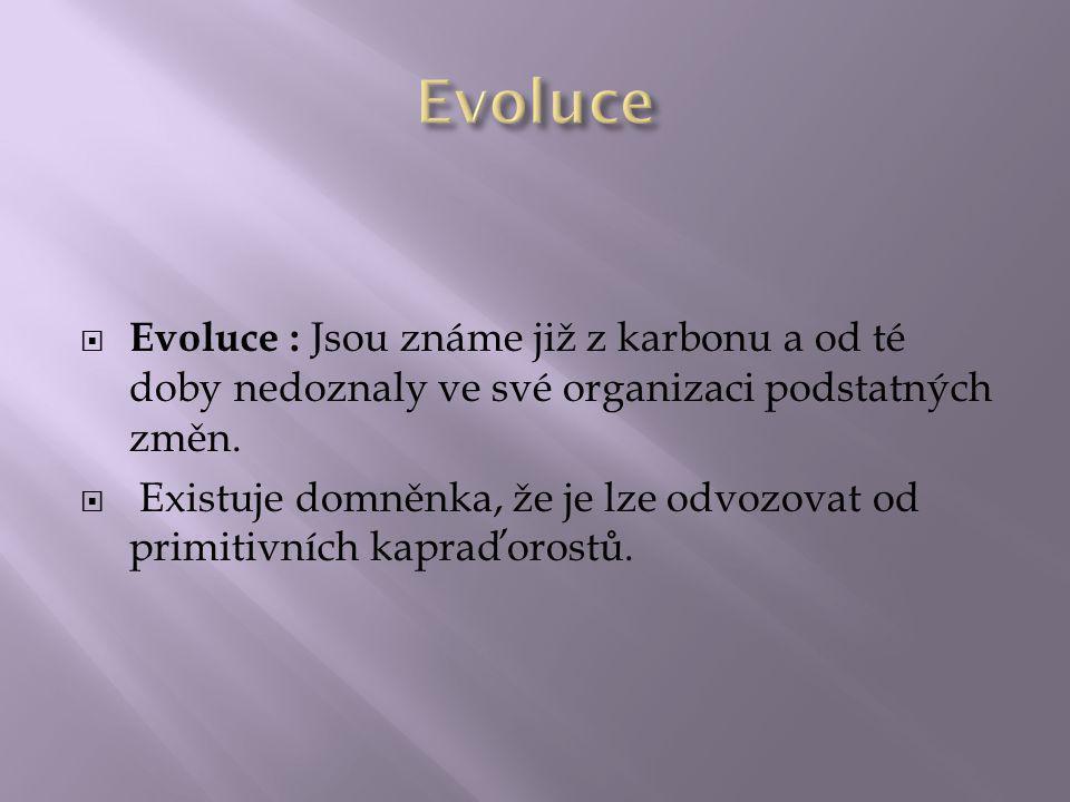 Evoluce Evoluce : Jsou známe již z karbonu a od té doby nedoznaly ve své organizaci podstatných změn.