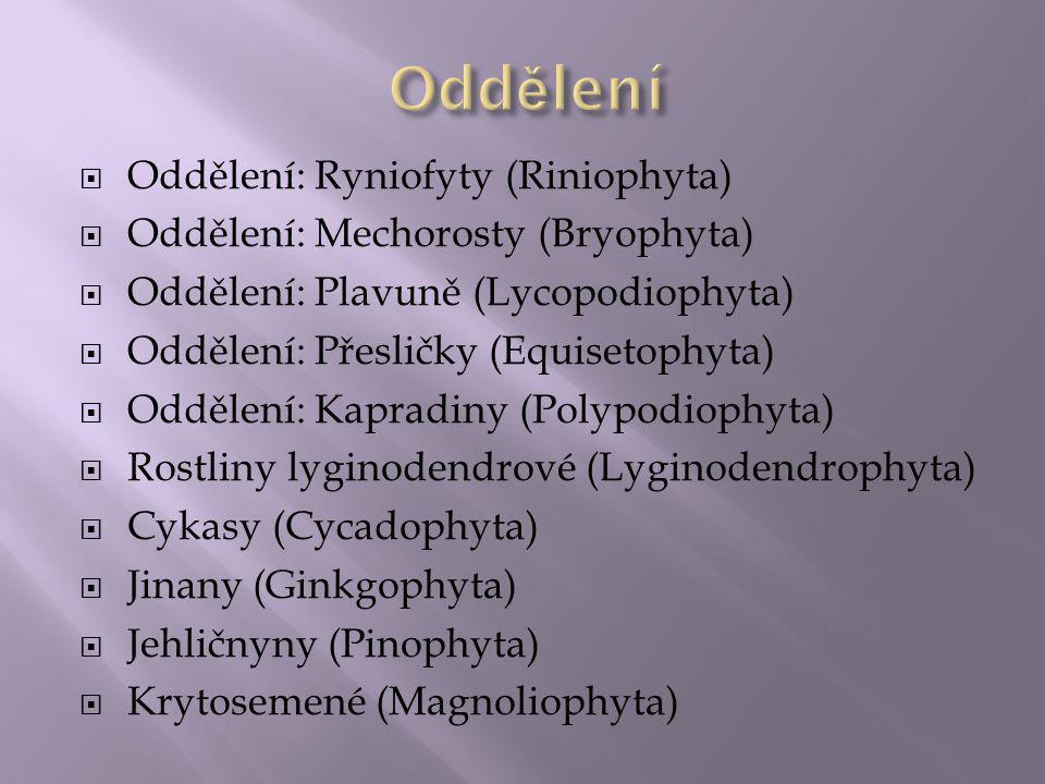 Oddělení Oddělení: Ryniofyty (Riniophyta)