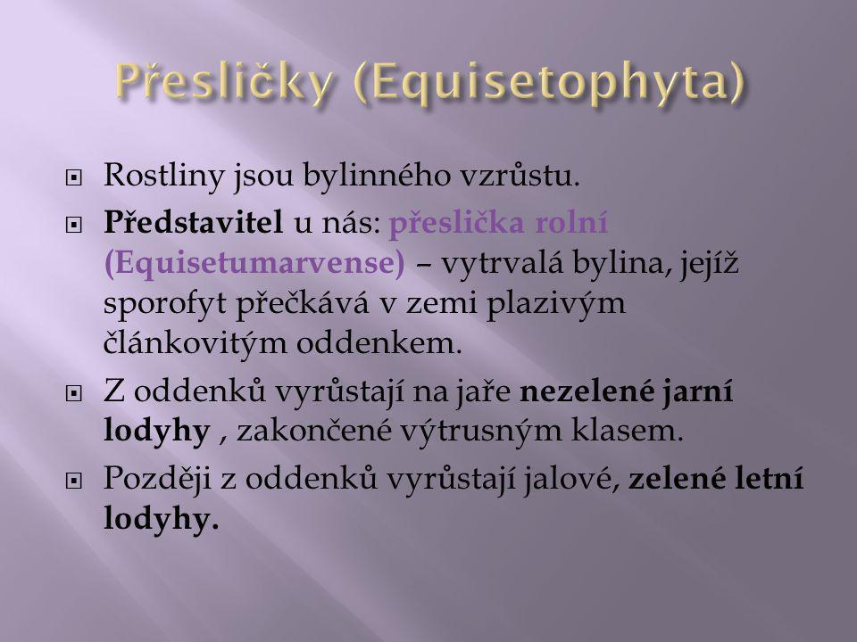 Přesličky (Equisetophyta)