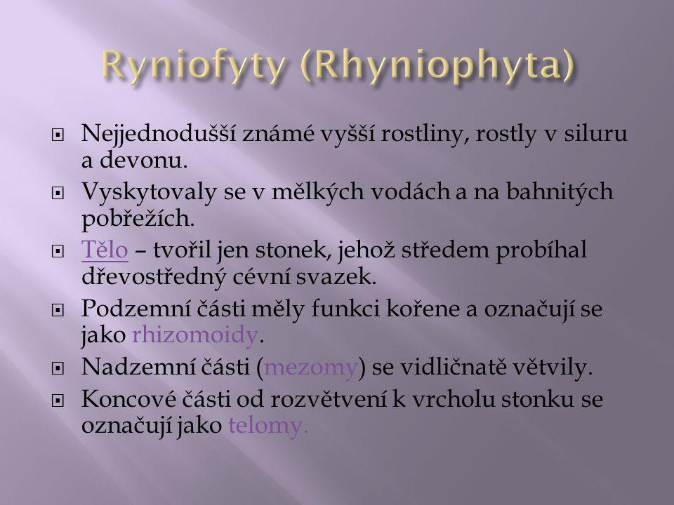 Ryniofyty (Rhyniophyta)