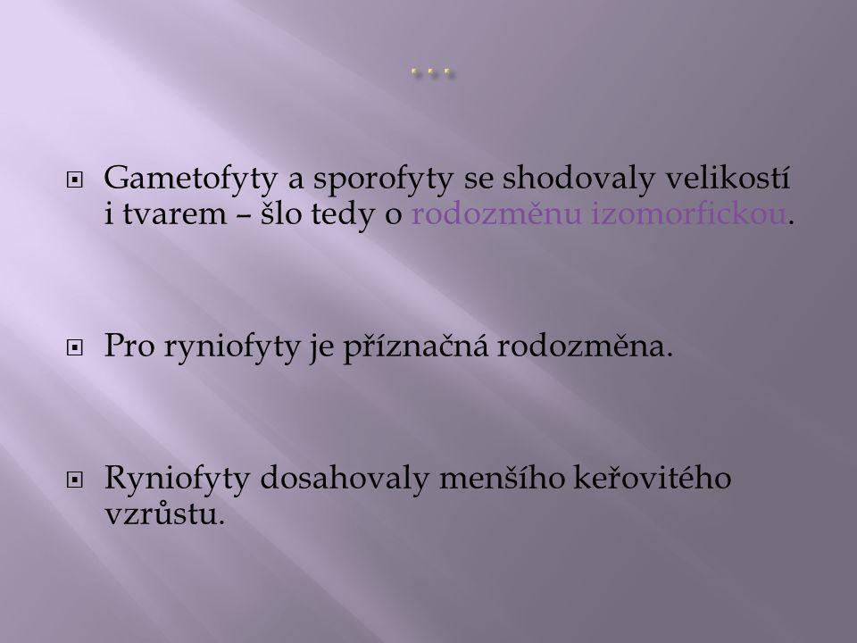 … Gametofyty a sporofyty se shodovaly velikostí i tvarem – šlo tedy o rodozměnu izomorfickou. Pro ryniofyty je příznačná rodozměna.