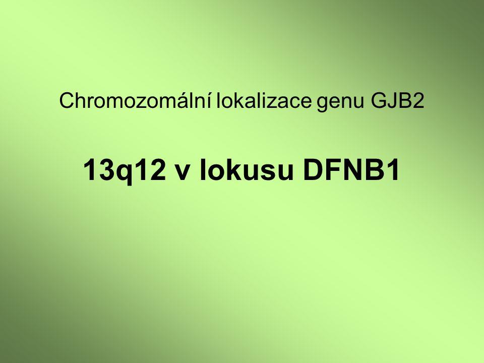 Chromozomální lokalizace genu GJB2