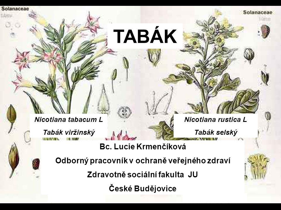 TABÁK Bc. Lucie Krmenčíková