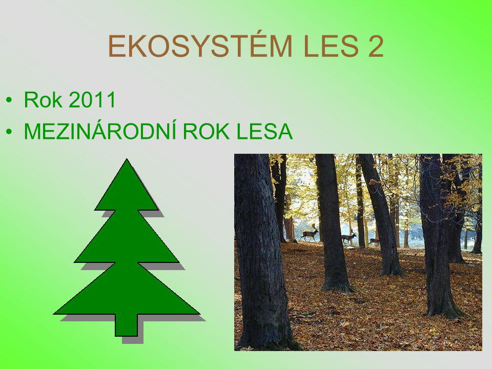 EKOSYSTÉM LES 2 Rok 2011 MEZINÁRODNÍ ROK LESA