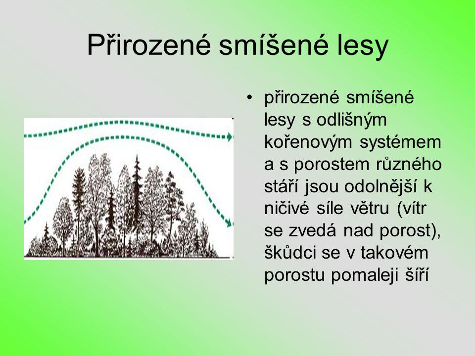 Přirozené smíšené lesy