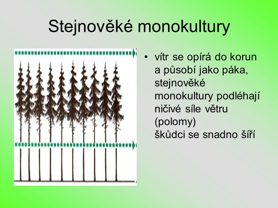 Stejnověké monokultury