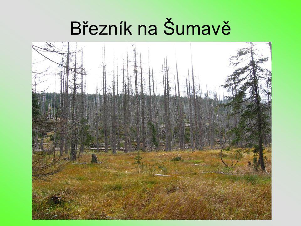 Březník na Šumavě
