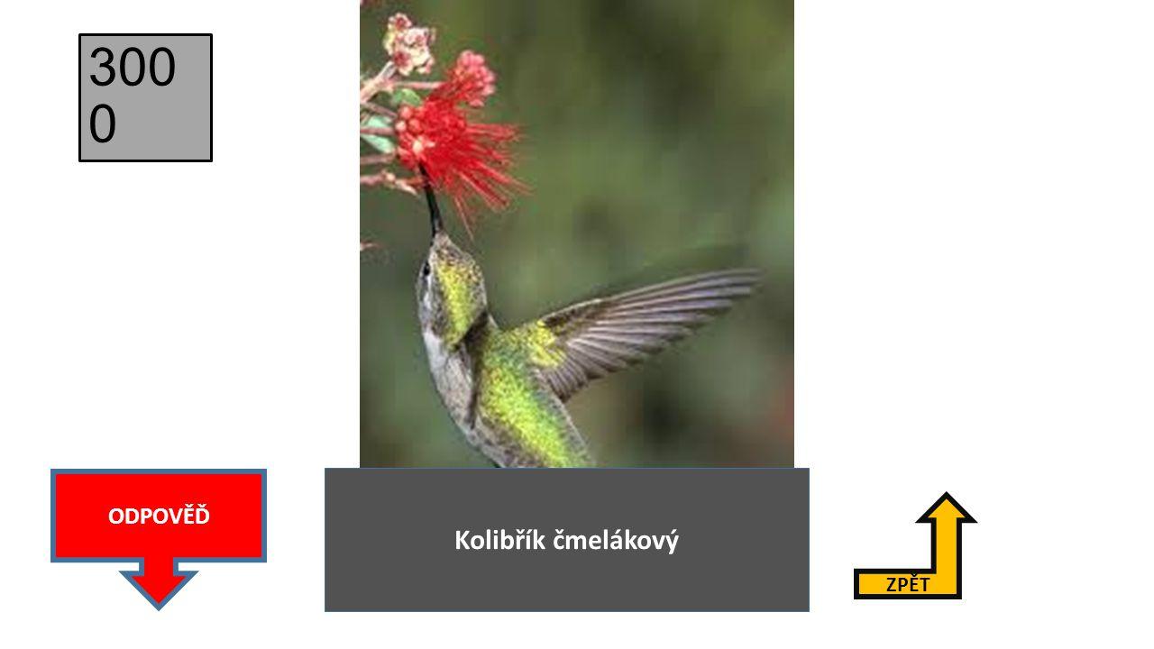 3000 ODPOVĚĎ Kolibřík čmelákový ZPĚT