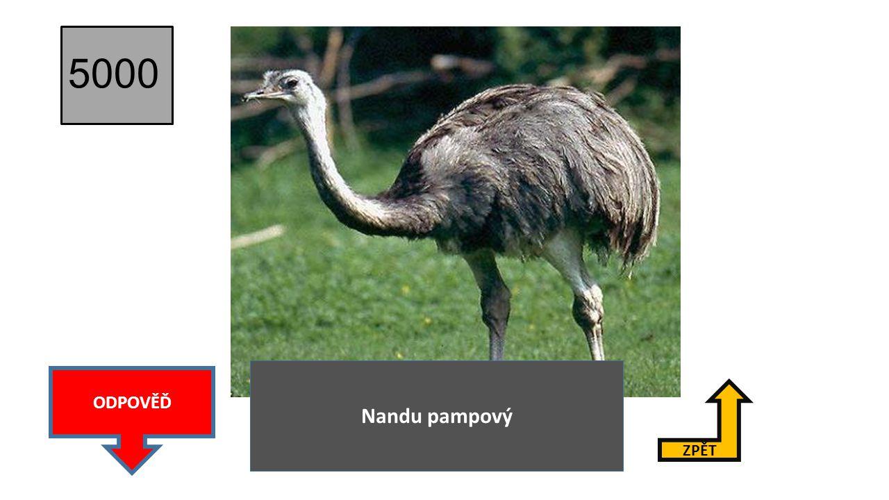 5000 Nandu pampový ODPOVĚĎ ZPĚT