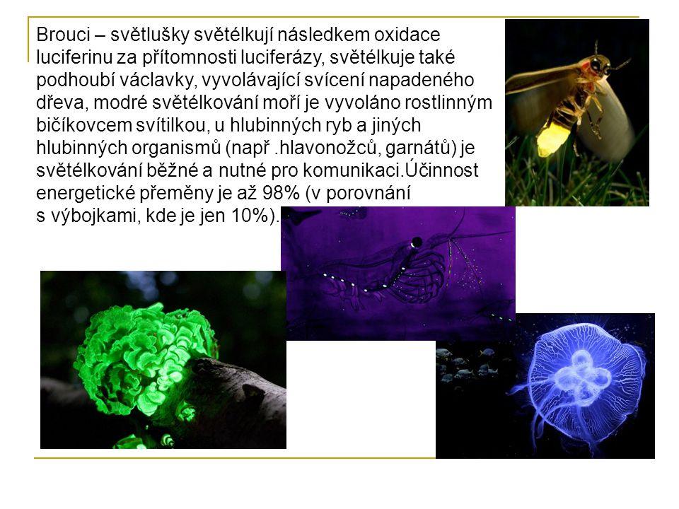Brouci – světlušky světélkují následkem oxidace luciferinu za přítomnosti luciferázy, světélkuje také podhoubí václavky, vyvolávající svícení napadeného dřeva, modré světélkování moří je vyvoláno rostlinným bičíkovcem svítilkou, u hlubinných ryb a jiných hlubinných organismů (např .hlavonožců, garnátů) je světélkování běžné a nutné pro komunikaci.Účinnost energetické přeměny je až 98% (v porovnání s výbojkami, kde je jen 10%).