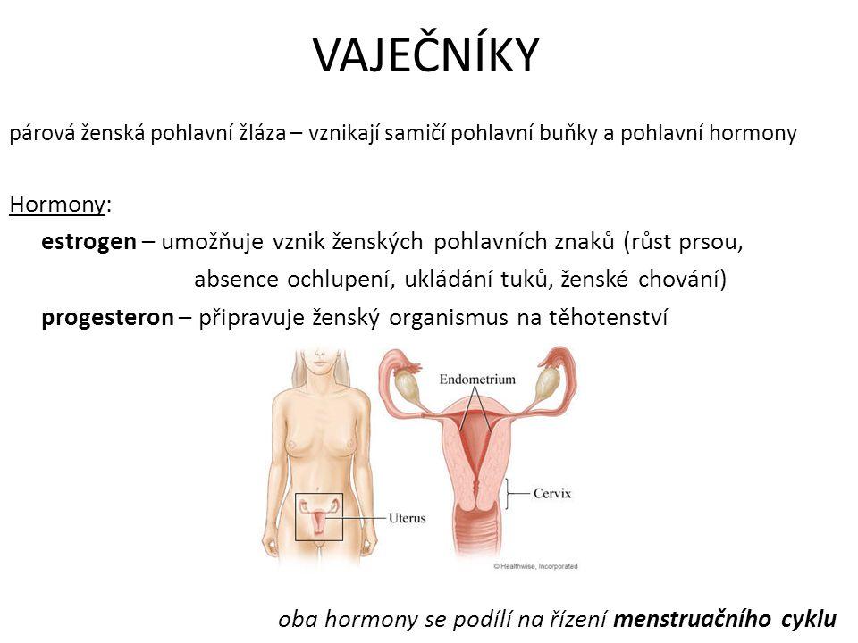 VAJEČNÍKY párová ženská pohlavní žláza – vznikají samičí pohlavní buňky a pohlavní hormony. Hormony: