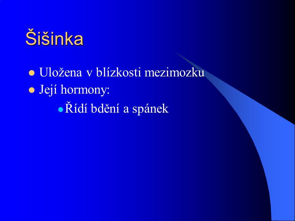 Šišinka Uložena v blízkosti mezimozku Její hormony: