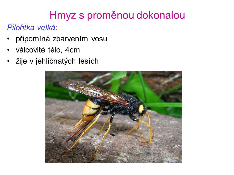 Hmyz s proměnou dokonalou