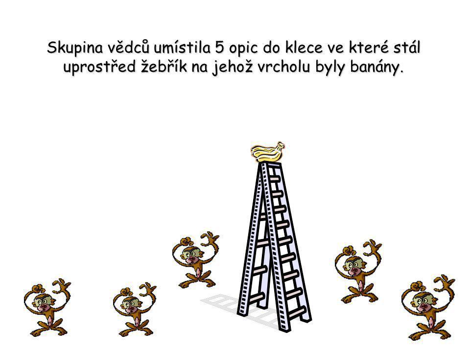 Skupina vědců umístila 5 opic do klece ve které stál uprostřed žebřík na jehož vrcholu byly banány.