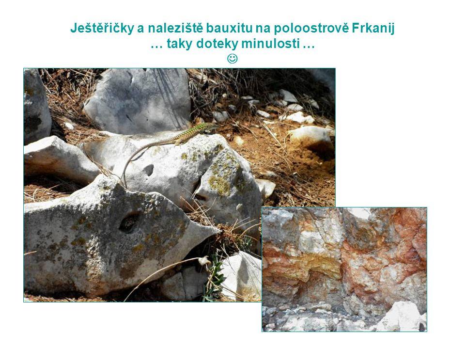 Ještěřičky a naleziště bauxitu na poloostrově Frkanij … taky doteky minulosti … 