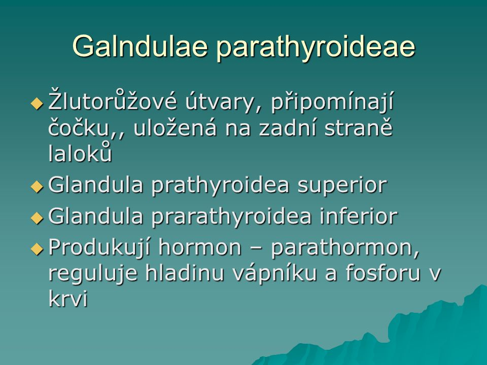 Galndulae parathyroideae