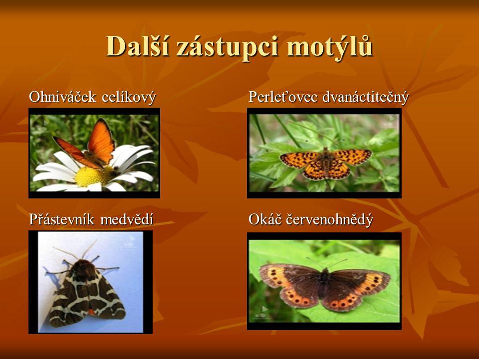 Další zástupci motýlů Ohniváček celíkový Perleťovec dvanáctitečný