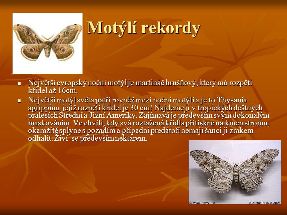 Motýlí rekordy Největší evropský noční motýl je martináč hrušňový, který má rozpětí křídel až 16cm.