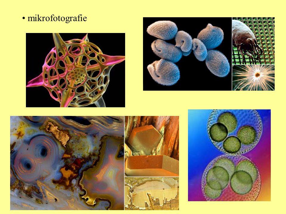 mikrofotografie