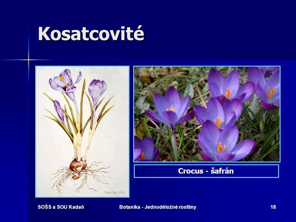 Botanika - Jednoděložné rostliny