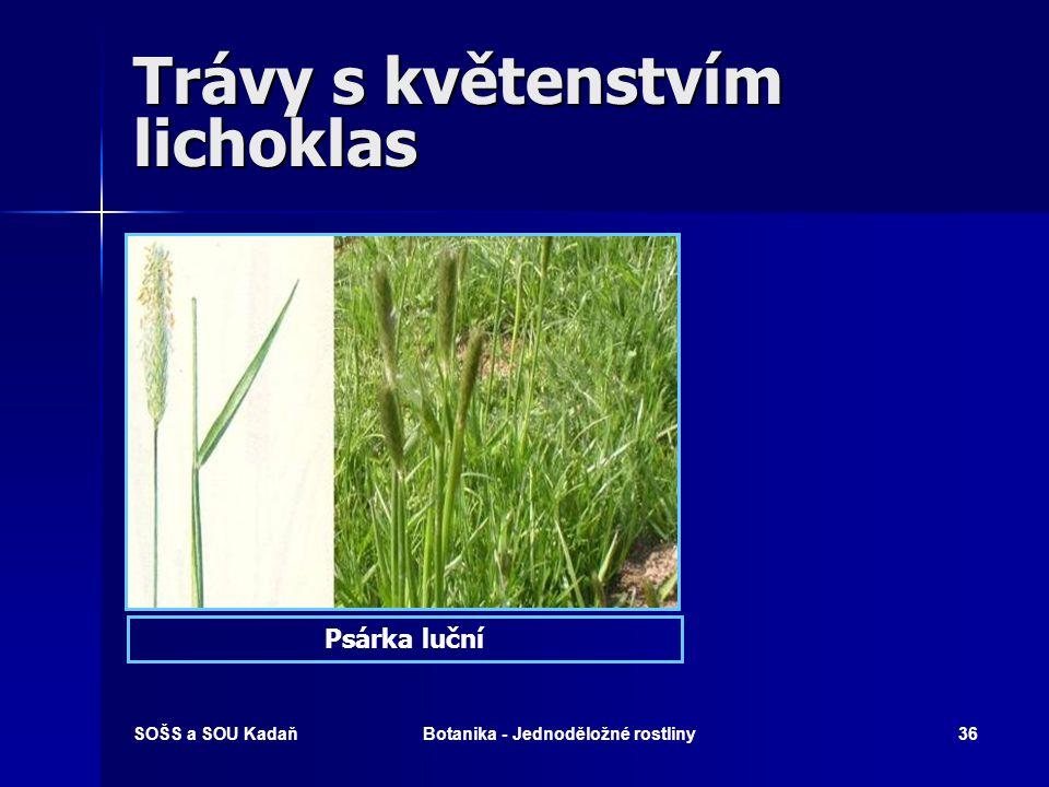 Trávy s květenstvím lichoklas