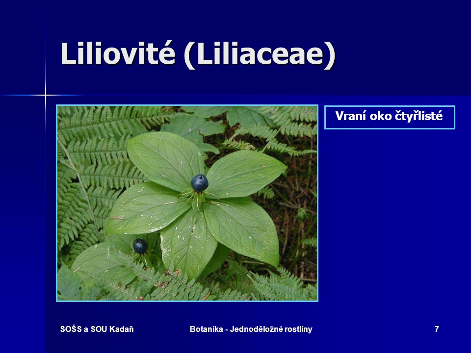 Liliovité (Liliaceae)